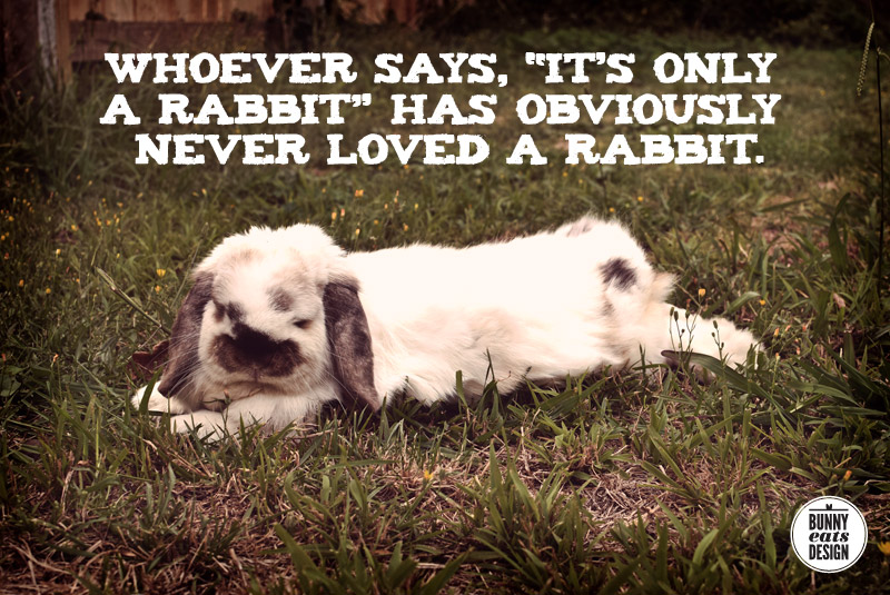 only-a-rabbit
