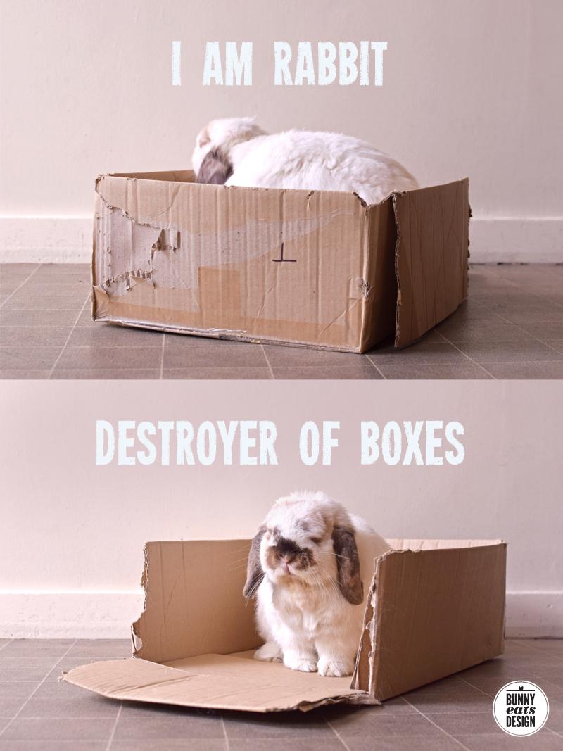 tofu-chews-cardboard-box001