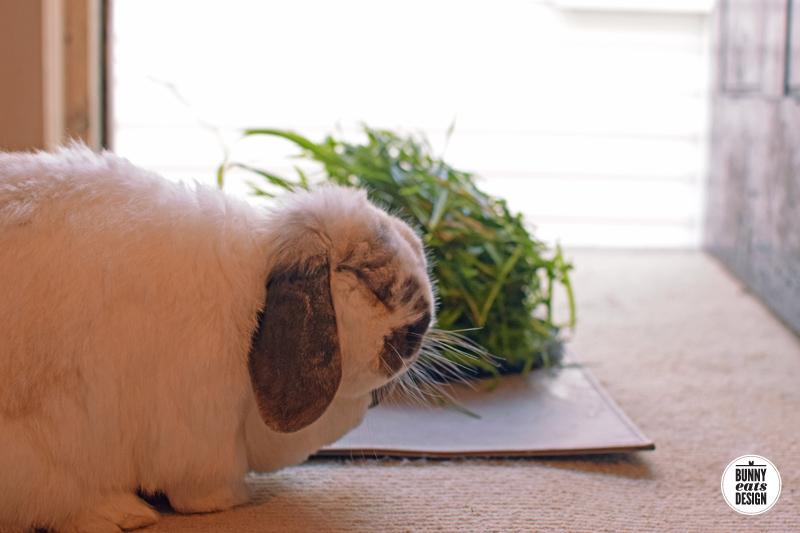 tofu-pile-of-grass004