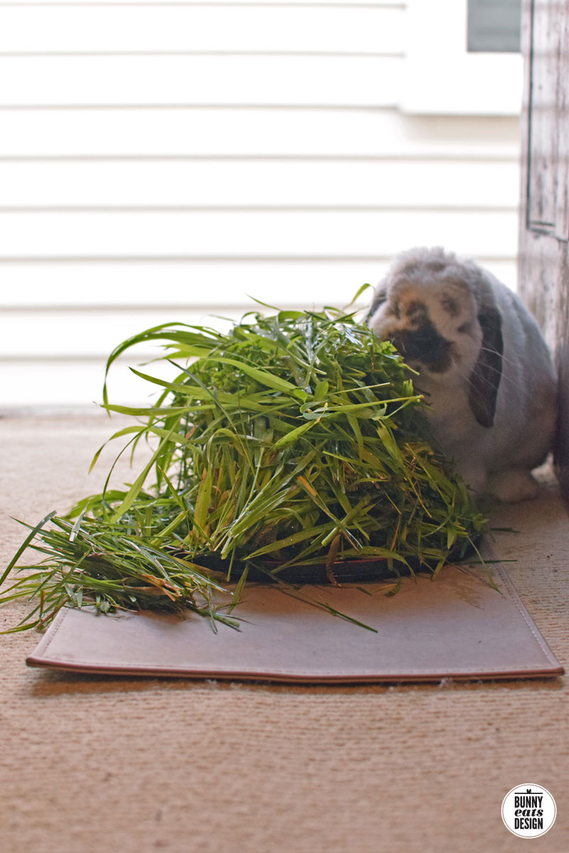 tofu-pile-of-grass010