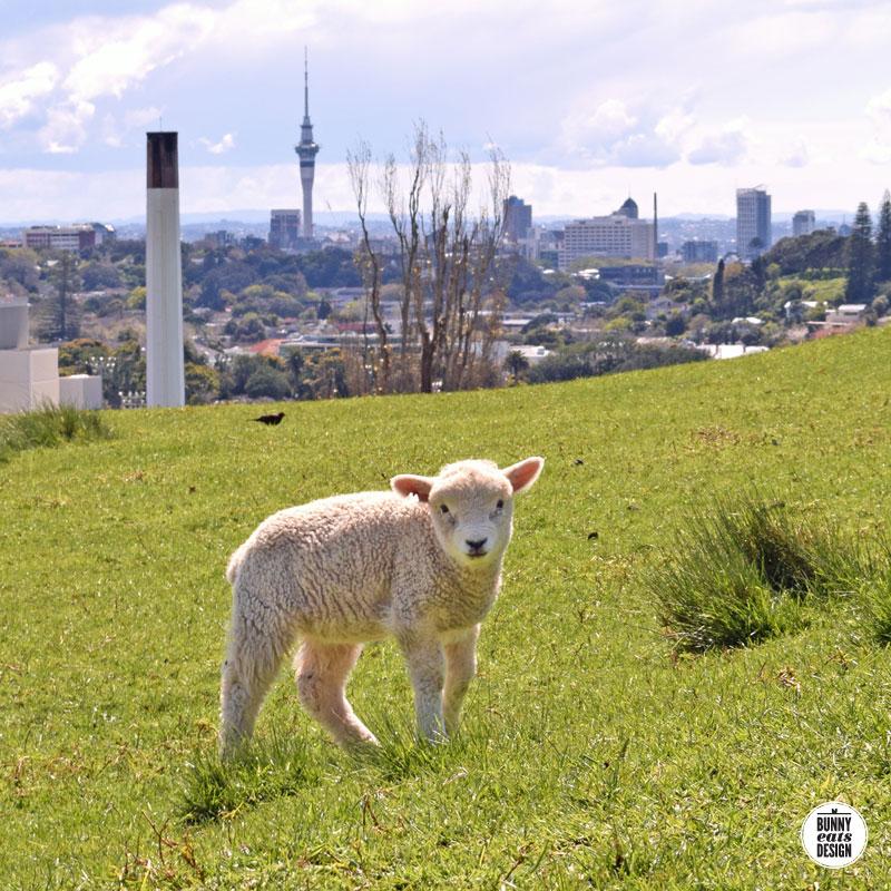 cornwallpark-lambs093