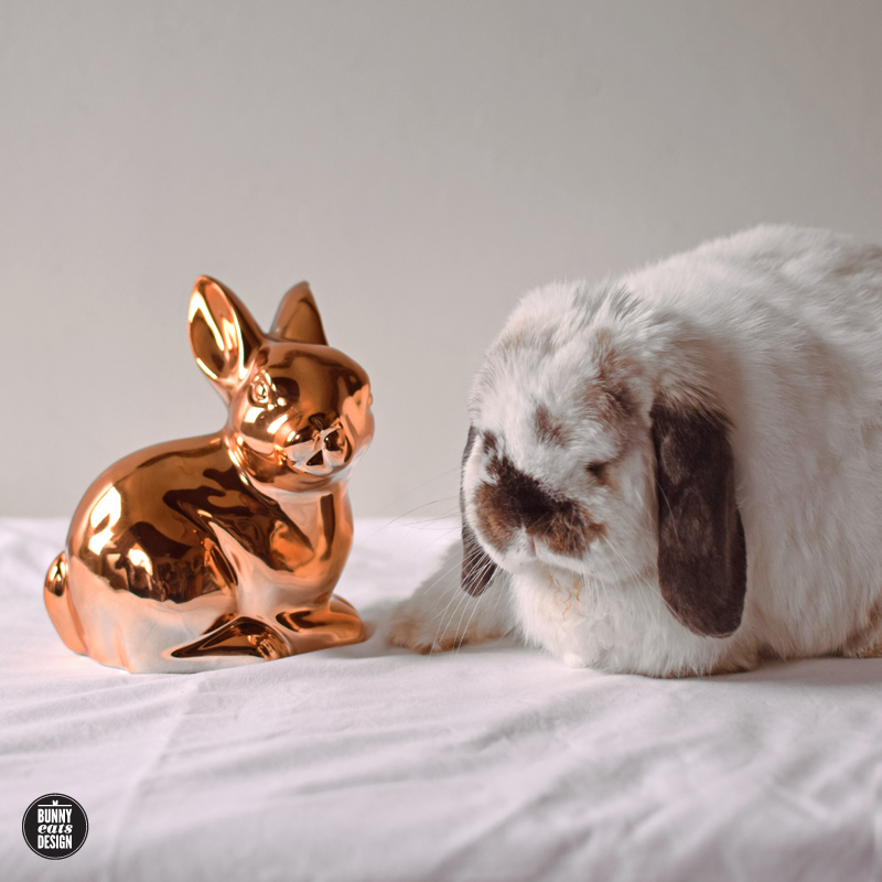 tofu-copper-rabbit-copy