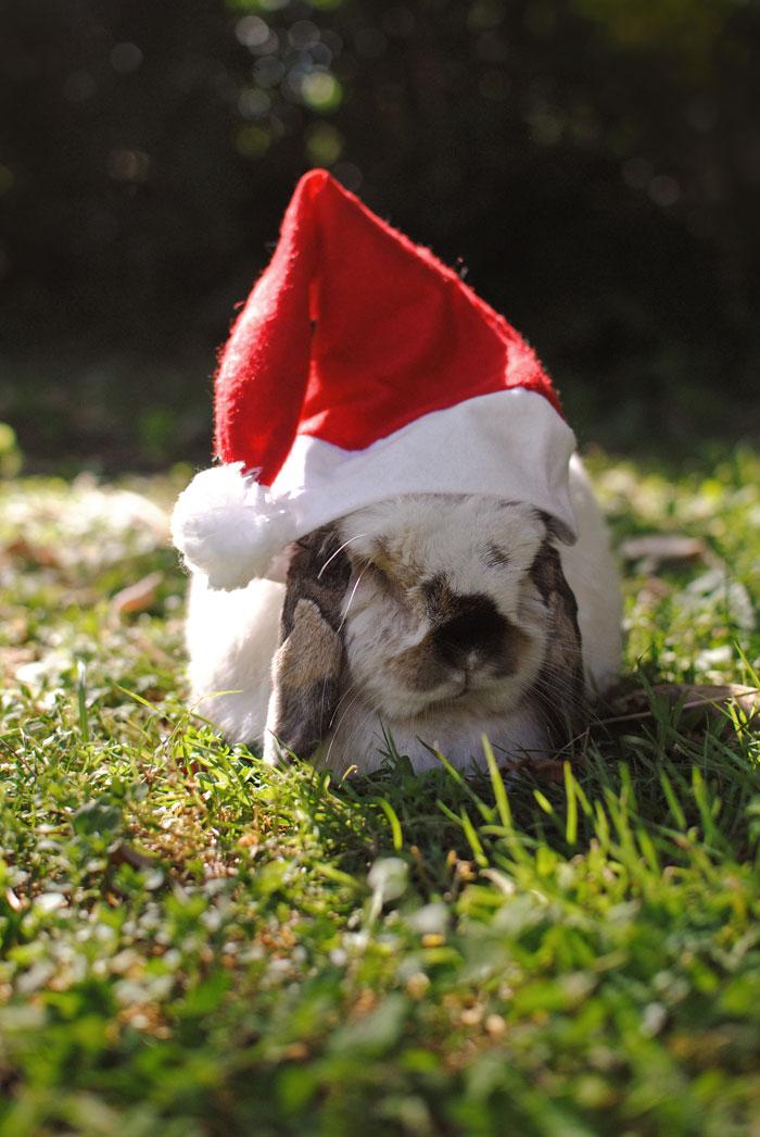 tofu-santa-hat