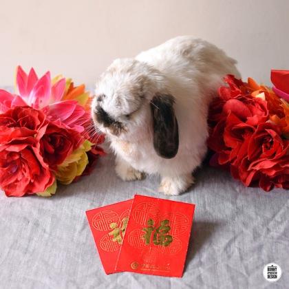 tofu-chinese-new-year052