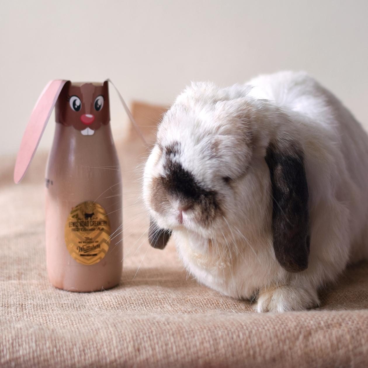 tofu-lewis-road-bunny001