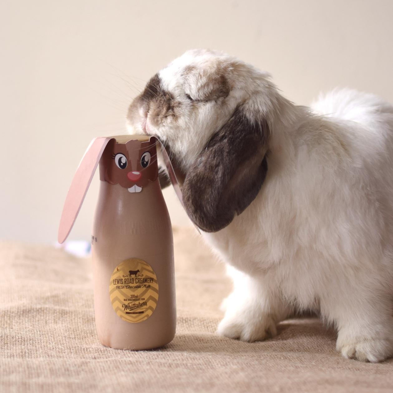 tofu-lewis-road-bunny004