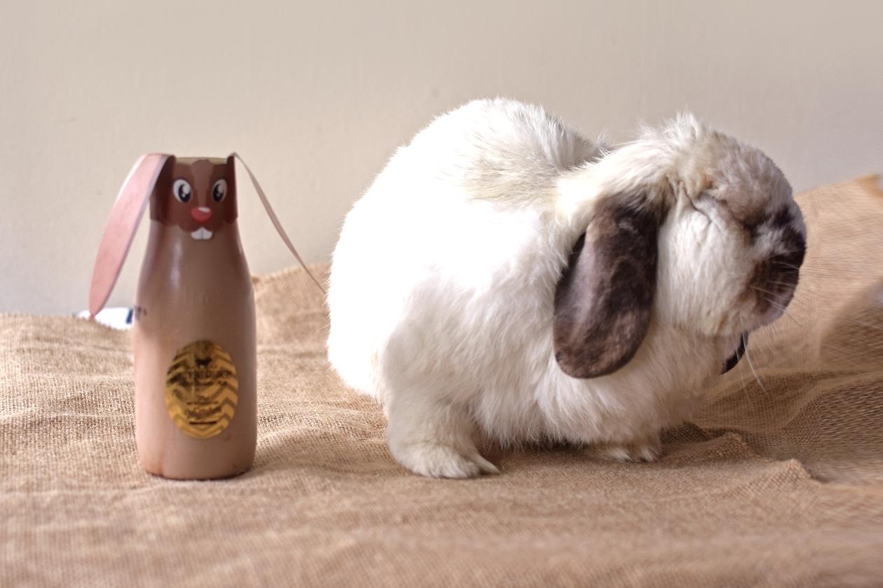 tofu-lewis-road-bunny006