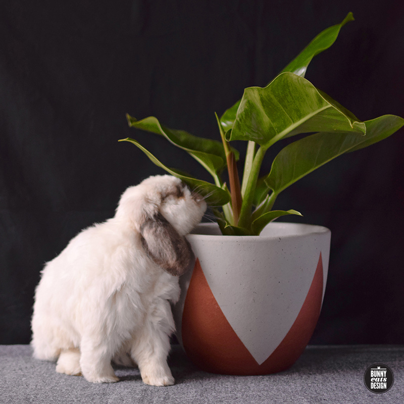tofu-philippe-001