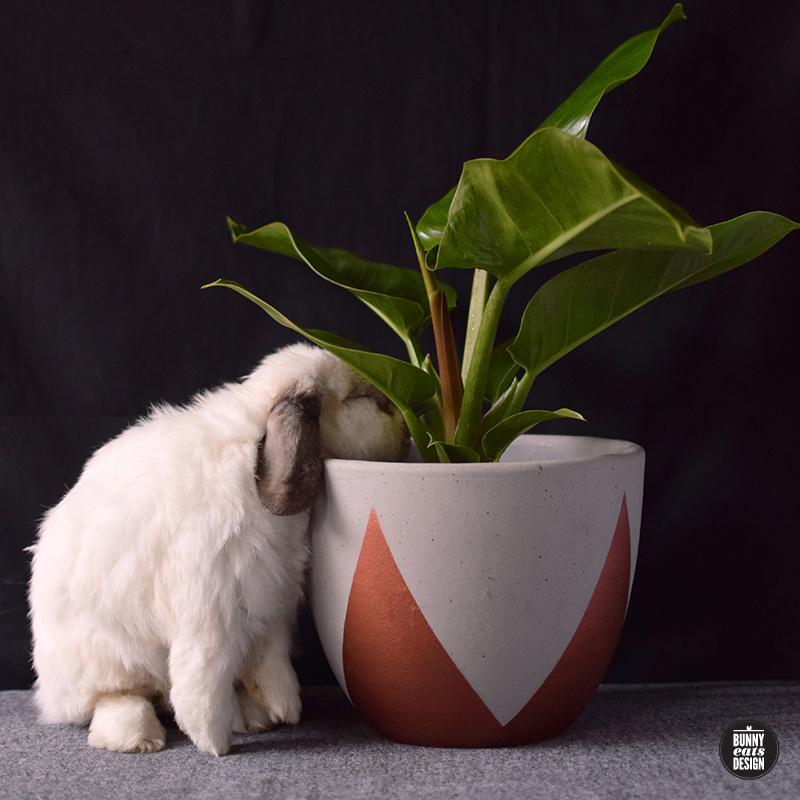 tofu-philippe-002