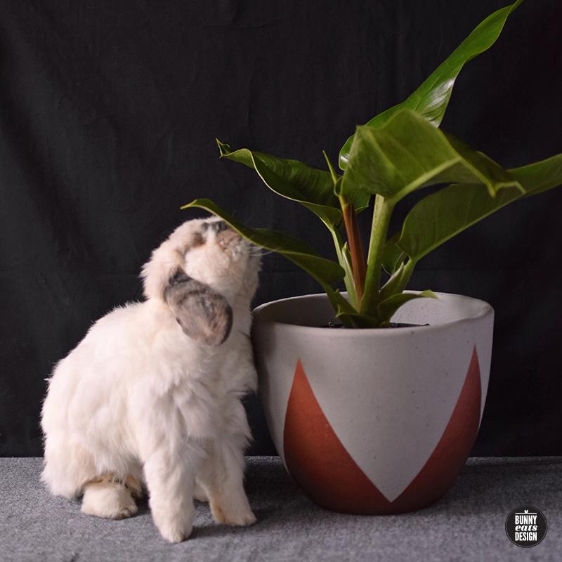 tofu-philippe-003