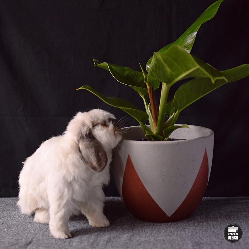 tofu-philippe-004