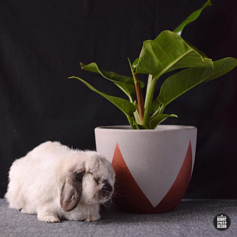 tofu-philippe-005
