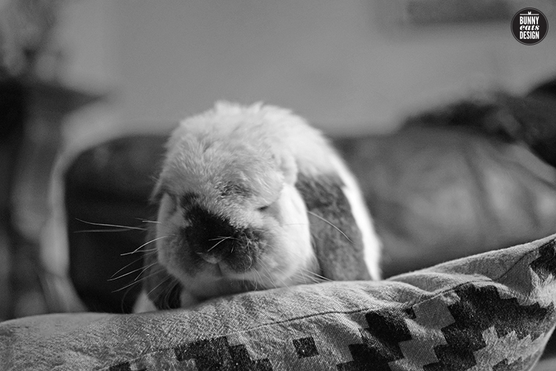 tofu-bunny-on-the-couch-june011