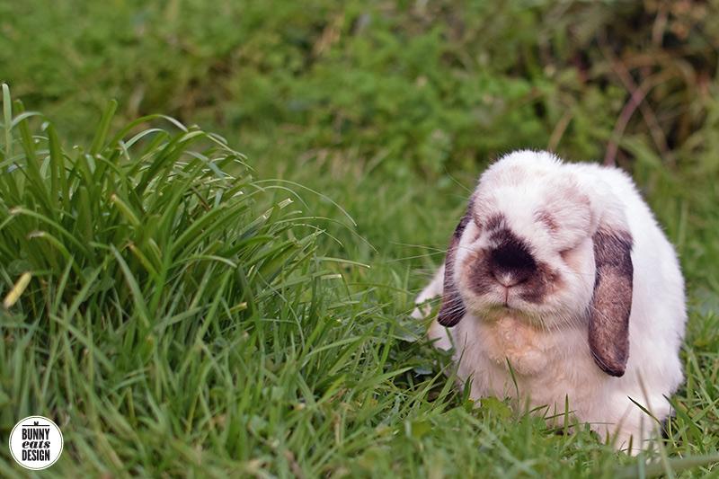 tofu-grass-july-001