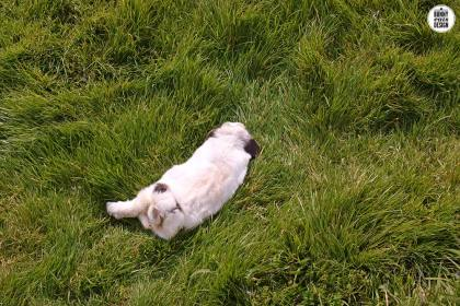 tofu-sleeping-grass