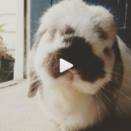 tofu-video