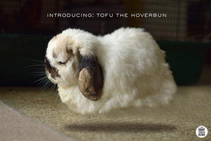 tofu-hoverbun-blog