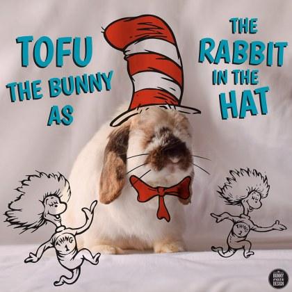 tofu-rabbit-in-the-hat