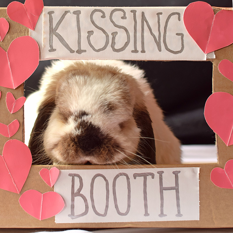 tofu-kissing-booth-022