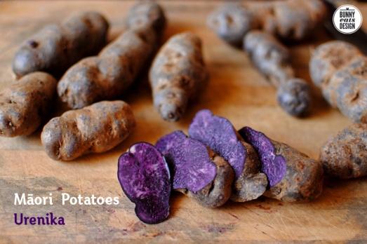maori-potato2
